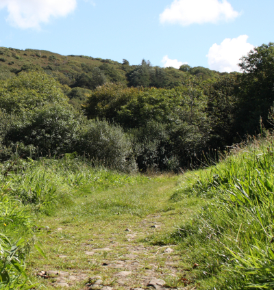 The meadow at the end of the path down the Peppercombe valley from Horns Cross