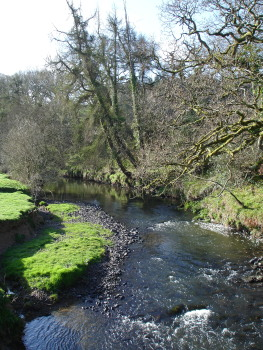 The Little Dart River from Affeton Mill Bridge